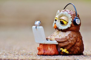 owl-947768_960_720